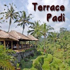 Terrace Padi